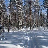 Весенняя лыжня 24.03.2018 :: Анатолий