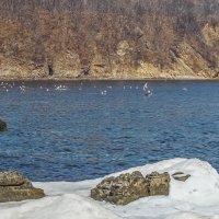 Уссурийский залив, бухта Десантная :: Эдуард Куклин