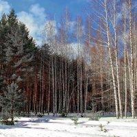 За несколько дней до апреля... :: Лесо-Вед (Баранов)