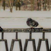 Ждем весну ..... :: Сергей Клюев
