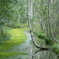 Весна на болоте. :: adrow