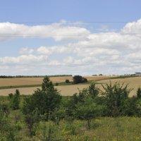 Дорога вдоль поля :: Ольга Винницкая (Olenka)