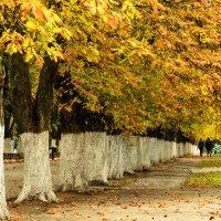 Уж осень наступила... :: Светлана