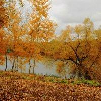 Рыжая осень. :: Инна Щелокова