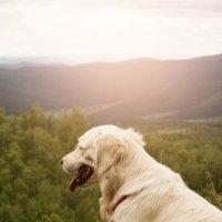 Собака :: Надежда Преминина
