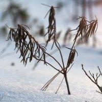 Зимний цвет :: Влад Владов