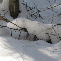 Снежный зверёк ползёт... :: Валюша Черкасова