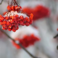 Холст и кисти зимы... :: Екатерина Торганская