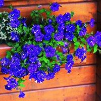 Вселенная в цветке ... :: Владимир Икомацких