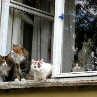 Кошкин дом :: Надежда