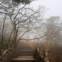 Весна в Китае :: Mari_L