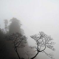 Весна в Китае :: Марина Лукина