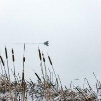 Утро туманное, утро седое... :: Виталий Павлов