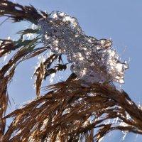 Уходящая зима: портрет в профиль :: Татьяна Кадочникова