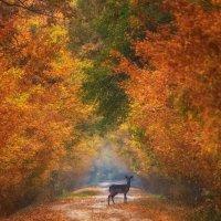 Autumn fantasy :: ian 35AWARDS