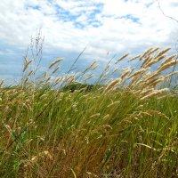 Травы луговые :: Надежда