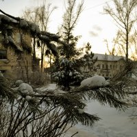Сквозь ветви :: Анастасия Михалева