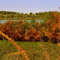 облепиха у озера :: Александр Прокудин
