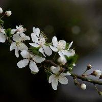 А вот и весна ! :: НИКОЛАЙ .