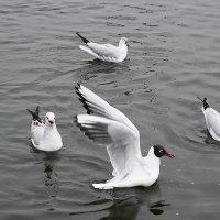 Весной чайки особенно крикливы :: Маргарита Батырева