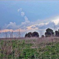 Удмуртские пейзажи  около д. Люк 28 Мая 2016 г. :: muh5257