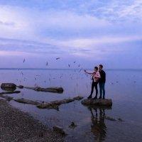 Море, чайки :: Анатолий Шулков