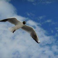 Чайка над водой :: Надежда