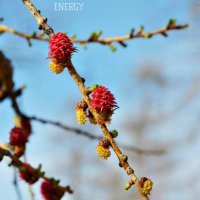 Весна :: Марина Анищук