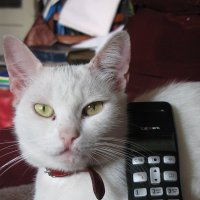 """""""Позвони мне, позвони! Март зовет меня из дома!.."""" (Песня кошки Маргошки) :: Алекс Аро Аро"""