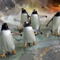 пингвины :: Михаил Бибичков