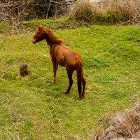 лошадь :: David Jotyan