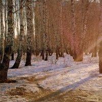 Весенние лучи  в конце марта . :: Мила Бовкун