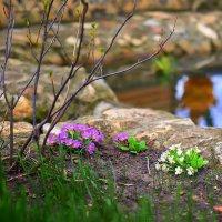 Весна :: Николай Николенко