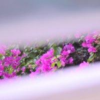 Цветы :: Svetlana Erashchenkova