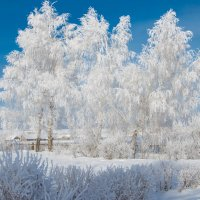 Морозное утро. :: ирина лузгина
