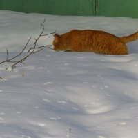 Мартовский кот :: Андрей Лукьянов