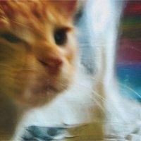 Кошачьи сны. :: Вера Катан