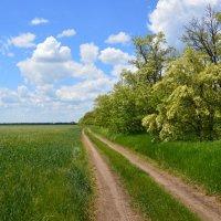 Весна. Мои дороги. :: Виктор