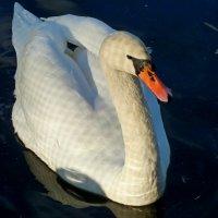 Качался лебедь на воде, осени листочки разгоняя... :: Лидия Бараблина