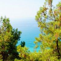 Море и сосны :: Lersa