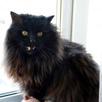 Жил да был черный кот.. :: Наталия П