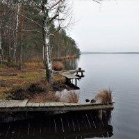 Берег лесного озера :: Leonid Voropaev