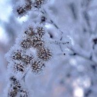 ......снежные   ежики..... :: Георгий Никонов