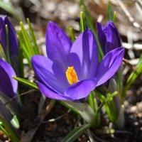 Дыхание весны :: Наталья Калинина