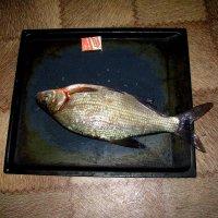 Вот такая рыбка :: Марина Таврова