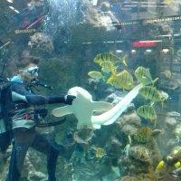 Кормление рыб в аквариуме :: Serg