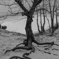 То ли корни,то ли нервы,то ли змеи.Это уж как кто видит. :: Стас