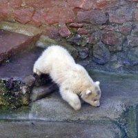 Медвежонок :: Татьяна Ларионова