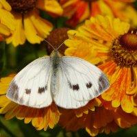 В цветочных владениях :: SELENA4950
