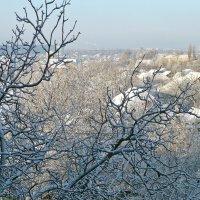 Снежное утро :: Татьяна Ларионова